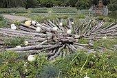 Squash and logs at the Parc Floral de Paris 12th, France
