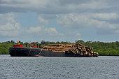 Grumes coupées sur Siberut chargées sur un bateau, Siberut, Indonésie