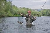 Fisherman on the Rhine, Taking a large Rhine Trout (Salmo trutta fario), Haut-Rhin, Alsace, France