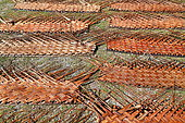 Drying of braided coconut leaves intended to cover the traditional roofs of the farés, Fakarava, Polynesia France