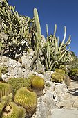 Barrel cactus (Echinocactus grusonii), Opuntia and Cereus, Jardin exotique de Monaco