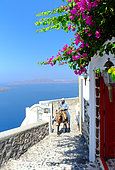 Steep alley on the island of Santorini in the Cyclades. The donkey or the mule is often the only means of transporting material through narrow and steep streets in the villages of the Cyclades, Greece.