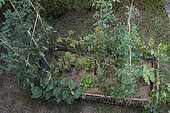 Lettuce 'Sagess', cucumber 'Lemon', cherry tomato and eggplant in a vegetable garden with flax mulch and low woven bamboo hurdles hedging the bed.