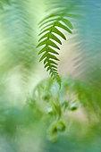 Fern foliage