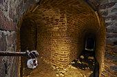 Cave Spider (Meta menardi) and cocoon in underground, France