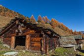 Alpine chalet and European larch (Larix decidua) in autumn, Mayen de Louché, Val d'Arolla, Valais canton, Alps, Switzerland