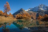 Blue lake and European larch (Larix decidua) in autumn, Val d'Arolla, Valais canton, Alps, Switzerland