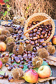 Sweet Chestnuts and apples, Moselle, France