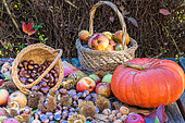 Automn harvest still life with Sweet chestnuts, Apples and Pumpkin, Moselle, France