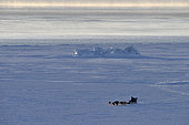 Inuit hunters coming back from bear hunt, february, Igterajivit distrcit, East Greenland