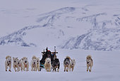 Professional hunters going on a bear hunt, february, Igterajivit distrcit, East Greenland