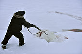 Polar bear hunt, february, Igterajivit district, East Greenland