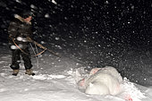 Polar bear hunt in the polar night, february, Igterajivit district, East Greenland
