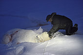 Inuit hunter and his bear. Igterajivit district in February. Eastern Greenland. He slips a tie in the bear's jaws in order to tow it later