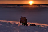 Hunters pulling bear meat in a sledge. Igterajivit district in February, eastern Greenland