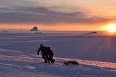 Chasseurs tirant de la viande d'ours dans un traineau. Dans le district d'Igterajivit en février - Groenland de l'est