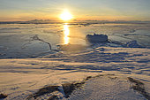 Icebergsn new ice in the Scoresbysund, Greenland, February 2016 at sunset around 2 p.m