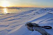 Paire de jumelles posées. Scoresbysund au loin et traces de lièvre polaire, Groenland