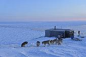Chasseur d'ours près de sa cabane à Unarteq. Groenland , février 2016