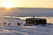 Hut and dog team in Unarteq, Greenland, February 2016