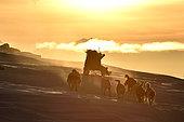 Chasseur inuit au soleil levant. Groenland , février 2016