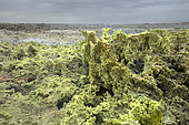 Dallol volcano Danakil depression, Afar region,Ethiopia,