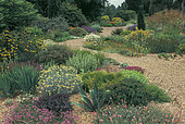 Beth Chatto Gardens, Creation of the famous English gardener Beth Chatto (1923-), Colchester, Essex, England