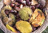 Basket of Sweet Chestnuts, Moselle, France
