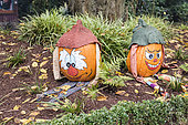 Pumpkins decorated for Halloween in autumn, Germany