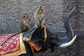 Long-tailed macaque (Macaca fascicularis) on the back of a statue representing an Asian Elephant