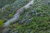 Wild brown bear (Ursus arctos), Fuentes del Narcea, Degaña e Ibias Natural Park, Asturias, Spain