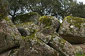 Red-legged Partridge (Alectoris rufa), Sierra de Andújar Natural Park, Jaen, Andalucía, Spain
