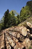 Forest, fir and spruce logs, Ballon d Alsace, Territoire de Belfort (90), France