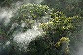 Forêt tempérée humide, Orakei Korako, île du Nord, Nouvelle Zélande