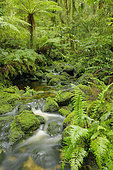 Temperate rainforest, South Island, New Zeland