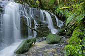 Purakaunui Falls, The Catlins,, South Island, New Zeland