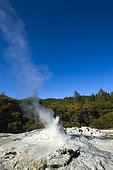 Lady Knox Geyser, Wai-o-Tapu geotermical place, Taupo Volcanic Zone, North Island, New Zeland