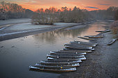 Delta of the Sauer in the early morning, Nature reserve of the Delta of the Sauer, Border of the Rhine, Munchhausen, Alsace, France
