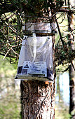 Ecological trap for processionary caterpillar, protection tree