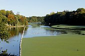 Pond covered with Common Duckweed (Lemna minor), Ponts Neufs, Brittany, France