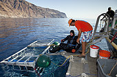Scuba diver entering the cage to watch Great white shark, Carcharodon carcharias, vulnerable (IUCN), Guadalupe Island, Mexico, Pacific Ocean