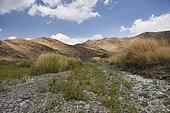 Wadi Eyia, Assir Mountains, Saudi Arabia