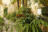 Fountain with pots of Clivia (Clivia sp), Hedychium (Hedychium sp) in the old restored cold greenhouse whose roof and glass walls have not been kept, Garden Serre de la Madone, Menton, Alpes-Maritimes, France