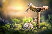 Snails on mushroom at sunrise, Treviso, Italy