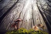 Mushrooms undergrowth, Luzzara, Reggio Emilia, Italy