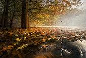Drops between the autumn colors, Parma, Italy
