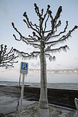 Ice sculptures on the shores of Lake Geneva during the cold wind episode of 17 January 2017, Versoix, Switzerland