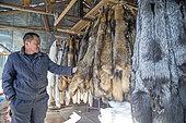 Fox farm and raccoon dogs for furs, Hengdaohezi, Heilongjiang, China,
