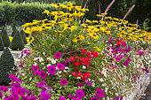 massif de plantes annuelles avec Petunia (Petunia sp), Cornflower (Rudbeckia sp), Tuberous Begonia (Begonia tuberhybrida), Grass (Gramineae sp)
