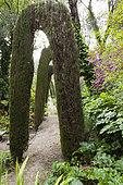 Path and arches of cypresses, Clos du Peyronnet, Menton, Alpes-Maritimes, France